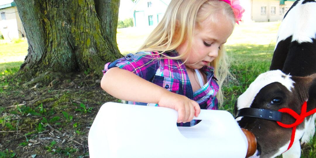 Little girl feeding calf with bottle outside