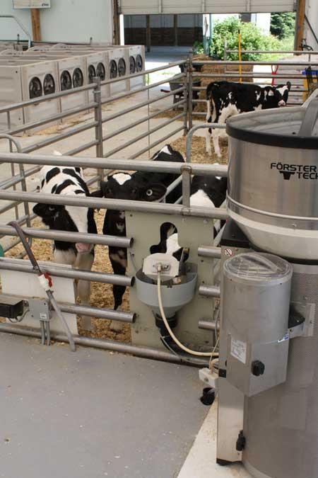 Setting the right feeding program for your calves