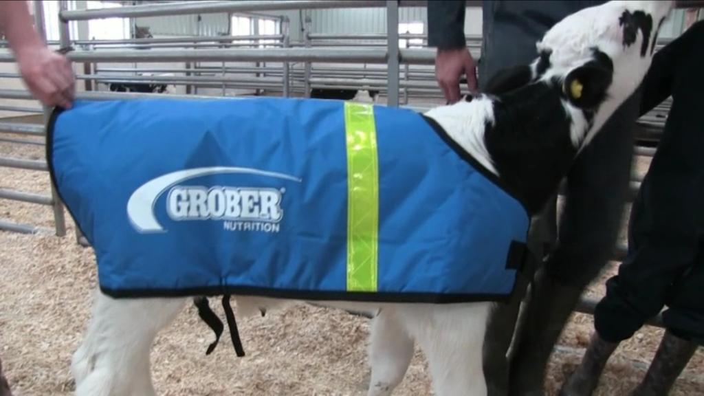 Grober Calf Coat