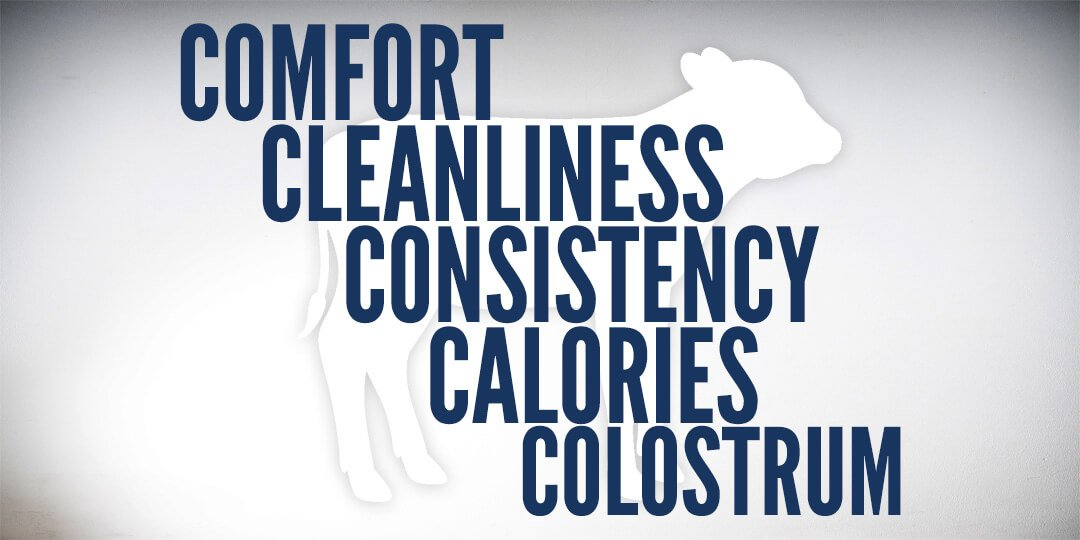 5c's of calf care - comfort, cleanliness, consistency, calories and colostrum
