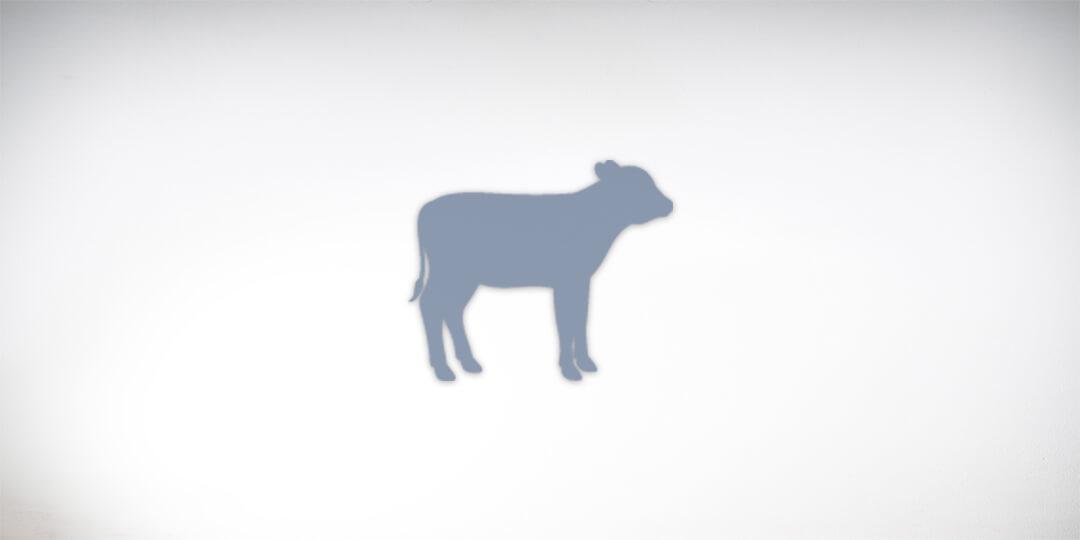 Calf silhouette