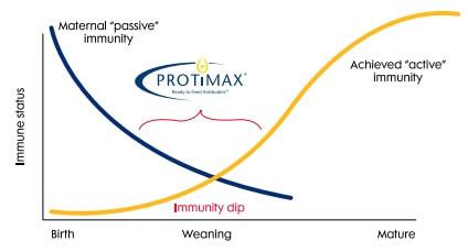 protimax swine graph immune-status and weaning