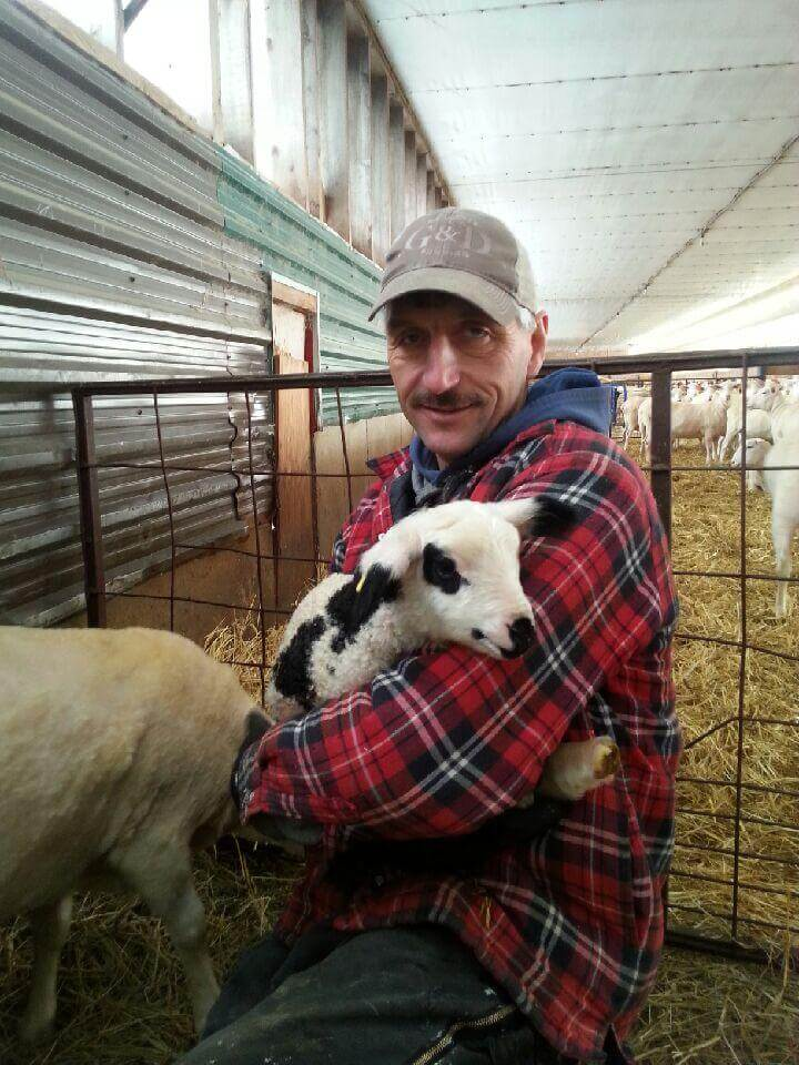 Farmer holds newborn lamb on the farm