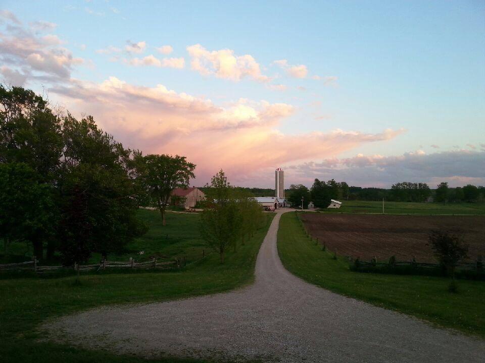 Sheep dairy farm in Ontario