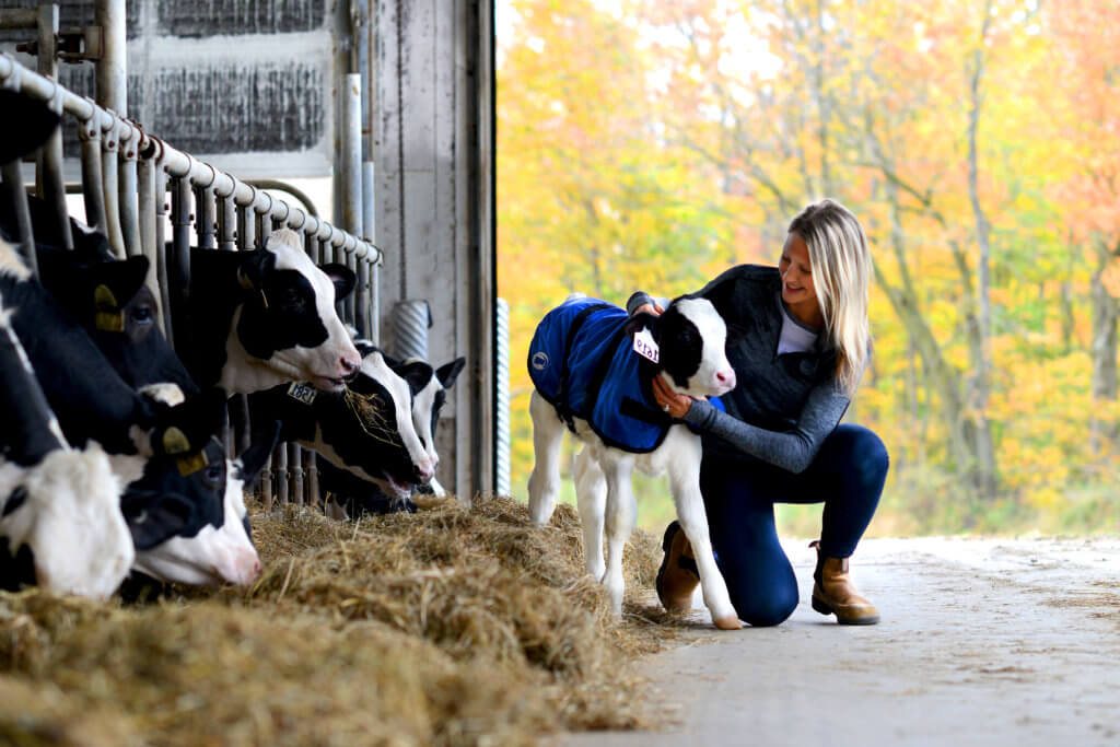 Grober nutrition calf coat. Woman with calf in feed alley with calf coat and fall trees in background.